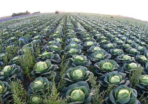 Бизнес по выращиванию овощей - бизнес-план, как начать с нуля 60